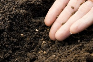 Kako sačuvati sjeme povrća do proljeća?