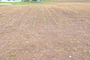 Za poljoprivredu pola miliona KM: Sanirati će se posljedice pandemije