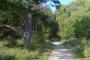 Gospodarenje područjem Šibenskih šuma