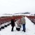 Sibirska borovnica uspeva i u Vranju