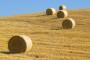 Edukacija poljoprivrednika o AGRONET-u i IPARD-u