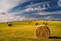 Bogdanović: Vlada krši zakon o poljoprivrednoj komori