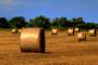 Trošimo EU novac za pripremu zajedničke poljoprivredne politike
