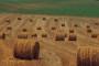 Ogorčeni poljoprivrednici: Ukinite Ministarstvo poljoprivrede!