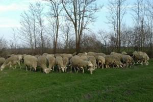 Ovčarstvom se počeo baviti sa svega 17 godina, danas ima 23 i stado od 180 ovaca te 200 janjadi!