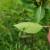Vrijeme pogoduje razvoju čađave krastavosti, paunovog oka i pjegavosti loze, tretirajte nasade