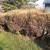 Šimširov plamenac desetkovao šimšir u Zlatiborskom okrugu