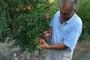 Ekološki uzgoj šipka