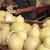 Novi proizvodi zaštićeni geografskom oznakom: Turski kesten, mađarski šaran i sicilijanski sir