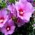 Lepota cveta koji traje samo jedan dan