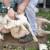 Užas na 25 engleskih farmi: Radnici pri šišanju udaraju ovce u glavu, stoje im na vratu i ostavljaju ih mrtve