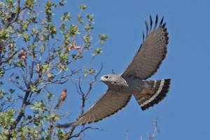 U poslednje dve decenije otrovano više od 2.000 divljih ptica