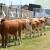 Sjenica: Poljoprivredni sajam koji ima značaj za čitav region
