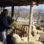 Sjenička oplemenjena ovca osvaja Šumadiju