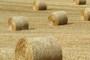 Nikad više poljoprivrednih zadruga s manje prometa i zadružne imovine