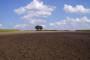 Ratari zbunjeni oko odabira sorti pšenice
