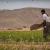 Drugi talas dolazi, skakavci će pojesti sve useve 19 miliona gladnih ljudi