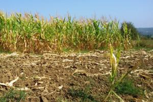 Ni u suši država nema sluha za seljaka