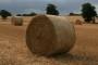 HUS podržava prijedlog zakona o poljoprivrednom zemljištu