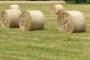 Novi zakon o poljoprivrednom zemljištu početak je reforme