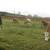 Lopovi zaklali bika i odneli meso, a vlasniku ostavili iznutrice
