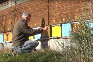 Slavonski med obuhvaća sedam vrsta, a sada na tržište ide zaštićen na razini EU