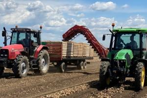 Slabiji rod jesenjeg luka jabučara - uvoz će dodatno oboriti cenu