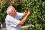 Još nije kasno zaštititi koštičavo voće od bolesti