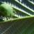 Koliko je opasna zelena stjenica u nasadima uzgajanih biljaka