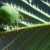 Koliko je opasno prisustvo stjenice u zasadima uzgajanih biljaka