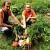 Na idiličnom domaćinstvu obitelji Klanfar gosti osjete sve čari života na selu