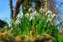Visibaba - otrovna, ljekovita i medonosna biljka
