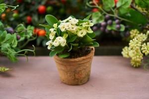 5 pravila nege sobnih biljaka u zimskom periodu