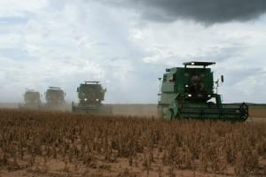 Turska za28% povećala uvoz soje u odnosu na prošlugodinu, najviše ukrajinske i američke