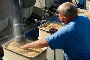 Farmeri u RS će smjeti proizvoditi GMO soju?