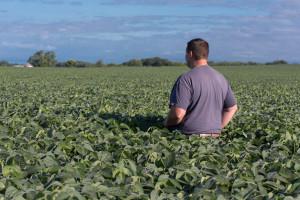 Dodjeljuju non-GMO sjeme soje za parcele do maksimalno 10 ha