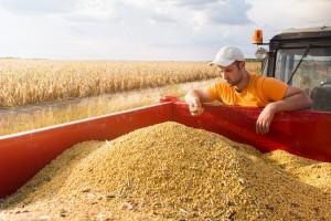 Eko soja uspijeva u područjima dobrim za uzgoj kukuruza