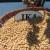 Ika nosi 25% sjemenskih usjeva soje u RH, ne zaostaju ni Tena i Lucija