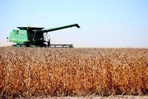 """Kroz """"efikasni hektar"""" planiraju duplirati proizvodnju uljarica do 2024."""
