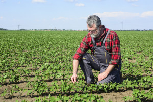 BiH farmeri zaradili skoro 3 miliona KM od genetski nemodificirane soje