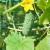 Magnezij sulfat: Kako i zašto koristiti gorku so u povrtarstvu?