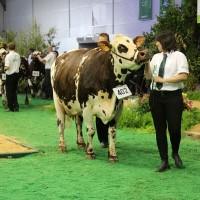 Kako izabrati i pripremiti životinje za izložbe i sajmove?