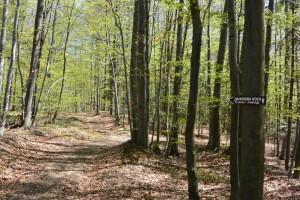 Koja prašuma u Srbiji ima stoletna stabla bukve i zašto su ona važna?