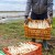 Šparoga: pripremite zemljište za presadnice na vrijeme