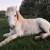 Priča o Srebrnom: Mlade žene s Brača spasile ozlijeđenog radnog konja