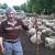Poslednji suvoplaninski pastir sa 250 ovaca i tranzistorom