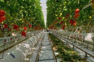 Davor Bošnjaković: Svi hrvatski proizvođači osiguravaju tek 30% godišnjih potreba za rajčicom
