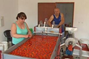Priprema zimnice: Kupovina ili kuvanje paradajza?