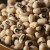 Banka semena pruža nove mogućnosti poljoprivrednicima