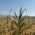 Prve procjene: Štete od elementarnih nepogoda u poljoprivredi 509 milijuna kuna